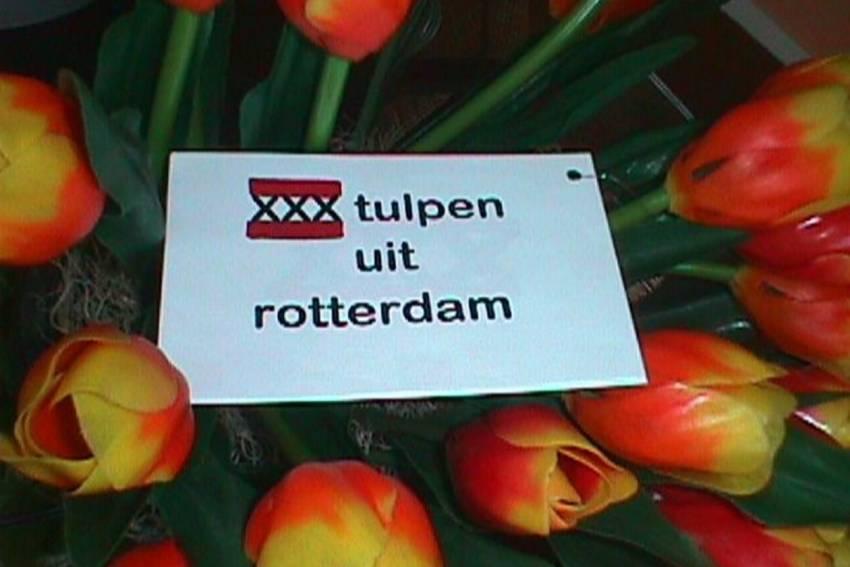 De Column van Vrijdag: Tulpen uit Rotterdam